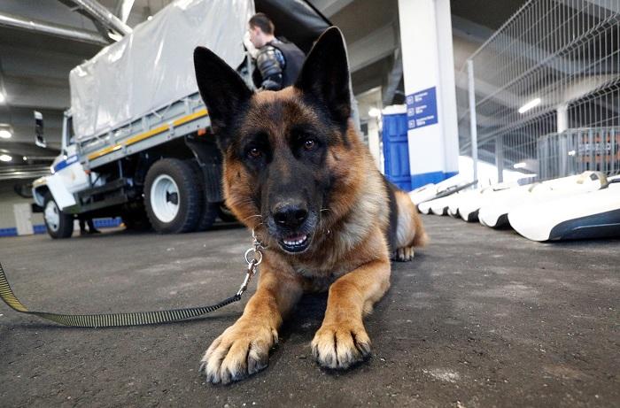 Westminster dog show prize money