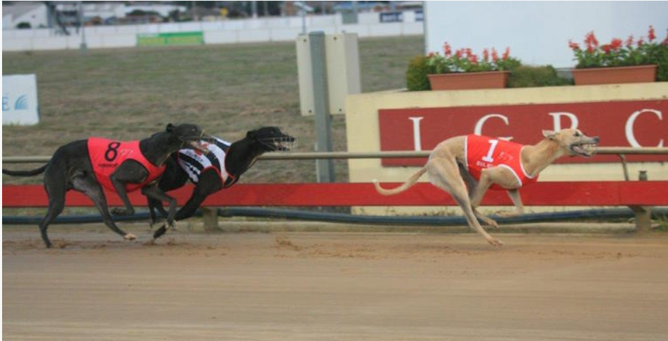 Greyhound Racing Australia Time & TV Channel Greyhound Racing On TV Tonight!